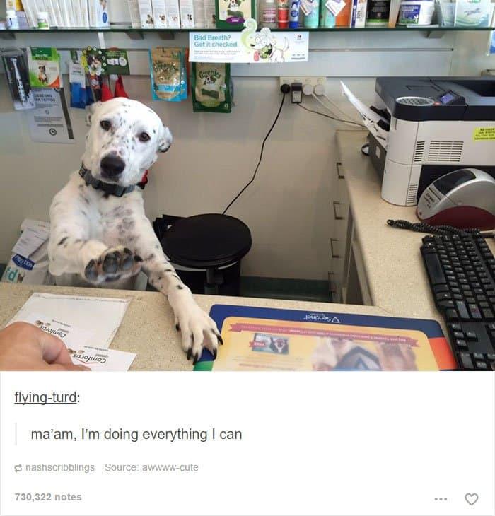 animal-tumblr-posts-reception-dog