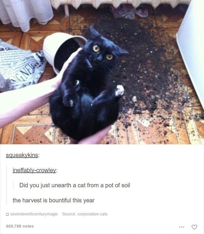animal-tumblr-posts-unearthed-cat