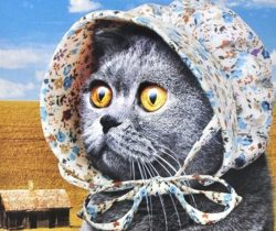 cat-bonnet