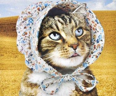 cat-bonnet-pet