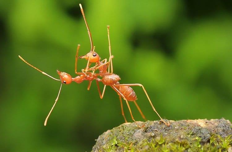 comedy-wildlife-photos-ant-ballroom-dancing