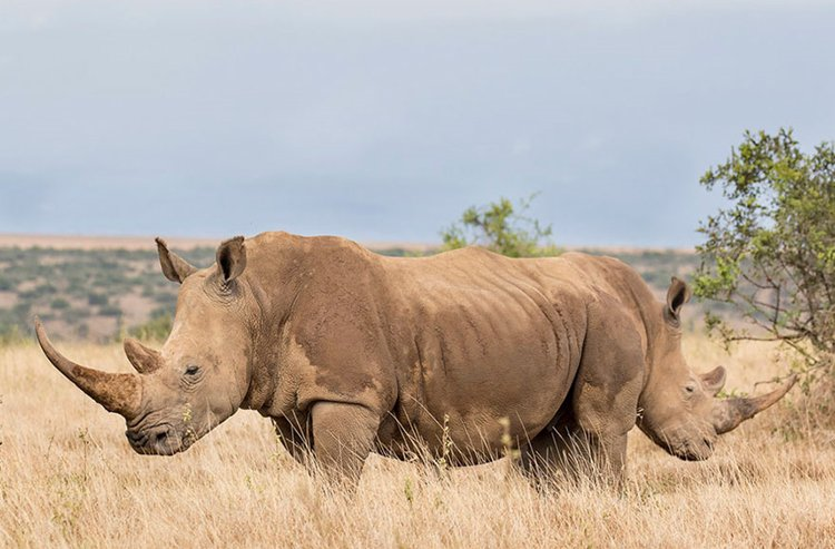 comedy-wildlife-photos-double-ended-rhino