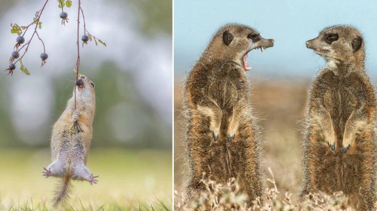 comedy-wildlife-photos-part-one