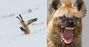 comedy-wildlife-photos-part-two