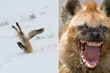 comedy-wildlife-photos-part-two