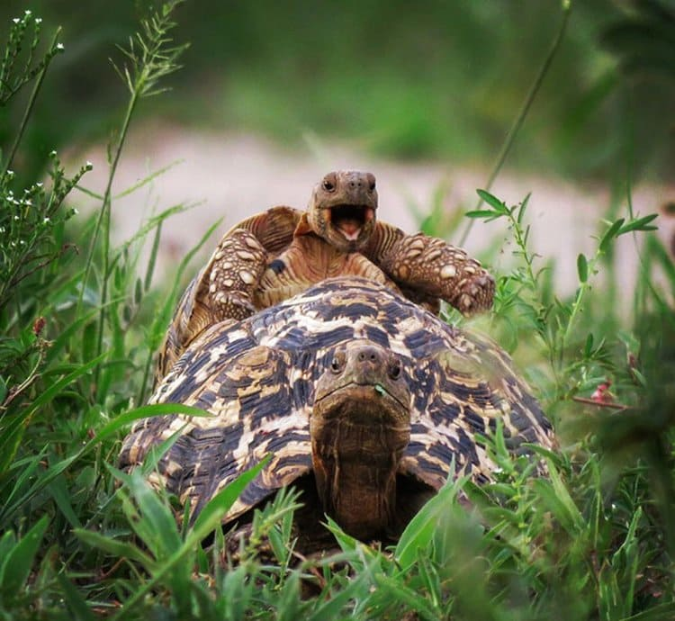 comedy-wildlife-photos-what-are-you-doing-george