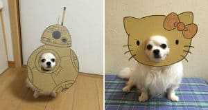 dog-costume-cardboard-cutouts
