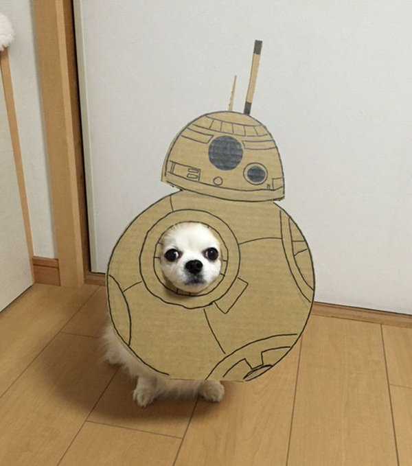 dog-costume-cardboard-cutouts-bb8