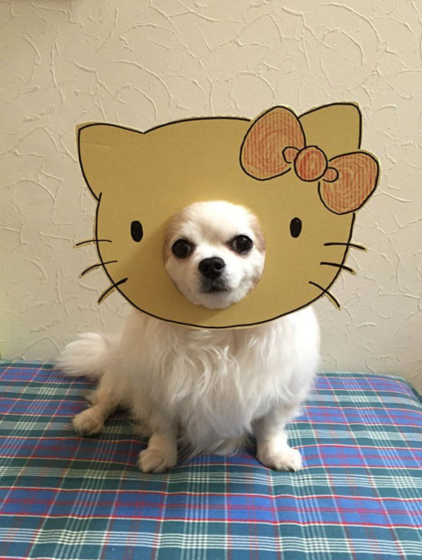 dog-costume-cardboard-cutouts-hello-kitty