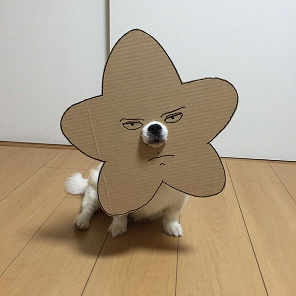 dog-costume-cardboard-cutouts-hoshi-arakawa-under-the-bridge