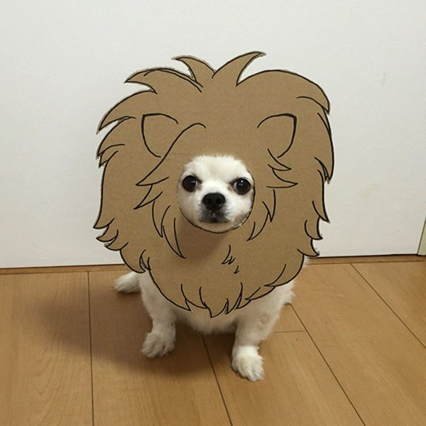 dog-costume-cardboard-cutouts-lion