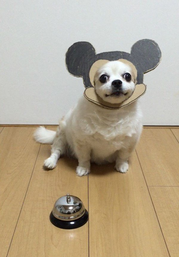 dog-costume-cardboard-cutouts-mickey-mouse