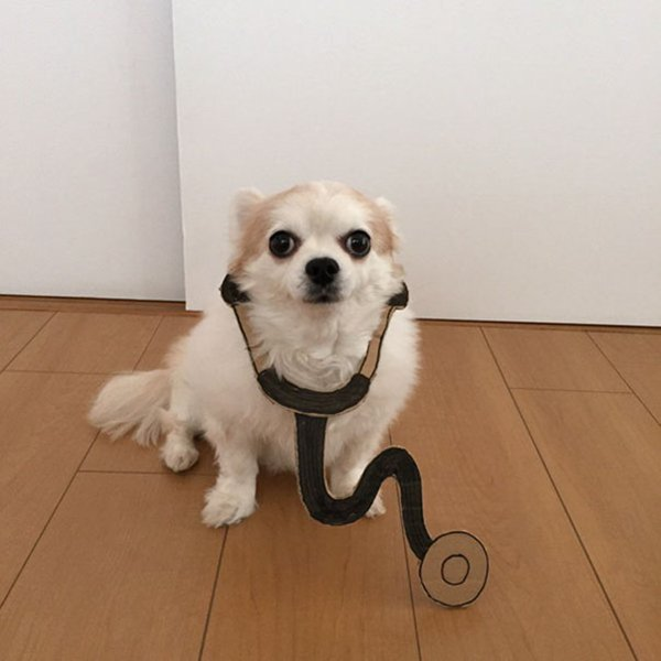 dog-costume-cardboard-cutouts-paging-dr-doggo