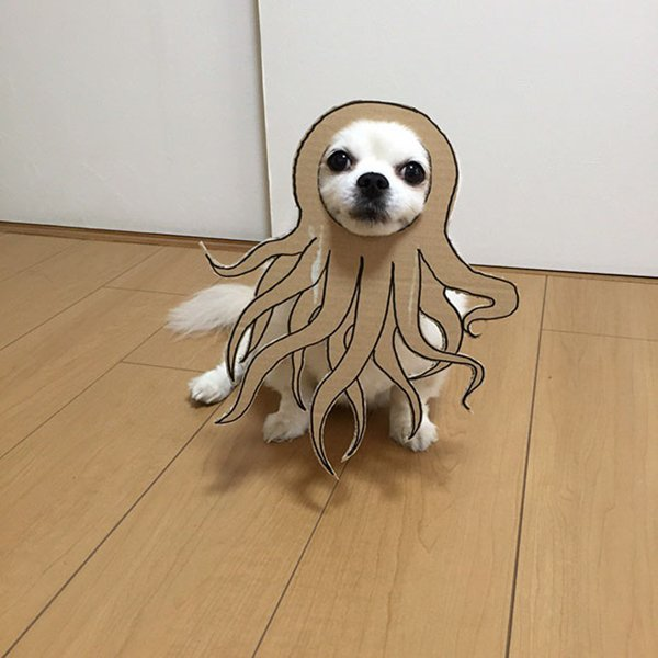 dog-costume-cardboard-cutouts-squid