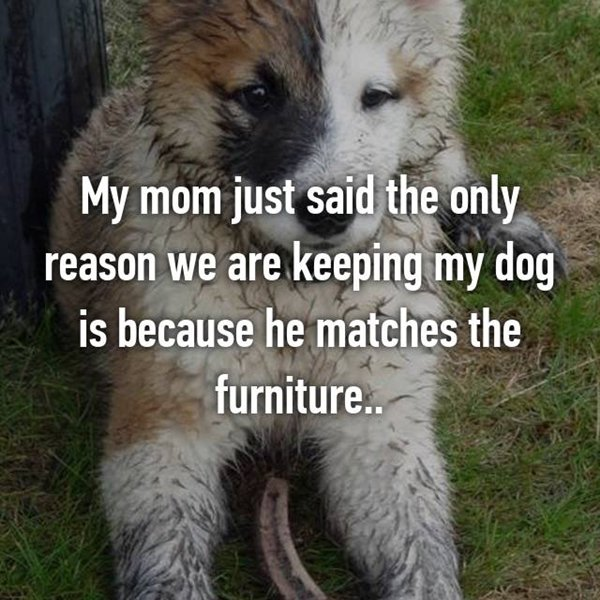 embarrassing-parent-things-dog-matched-furniture