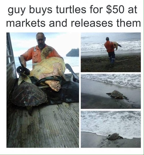 feel-good-photos-buy-release-turtles