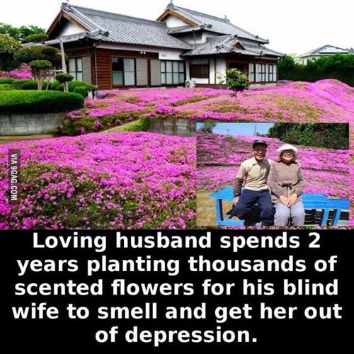 feel-good-photos-planted-fragrant-flowers-for-blind-wife
