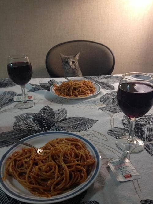 funny-animal-pictures-date-night-cat