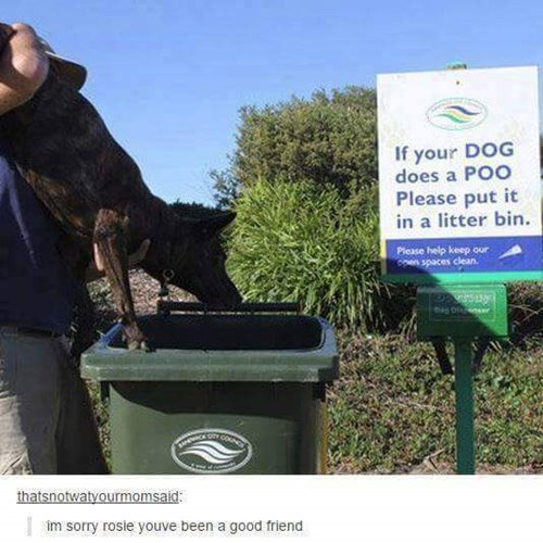funny-animal-pictures-put-it-in-bin