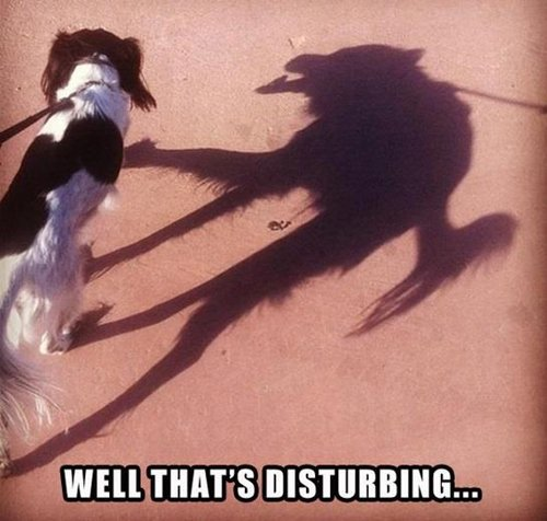 funny-animal-pictures-scary-shadow