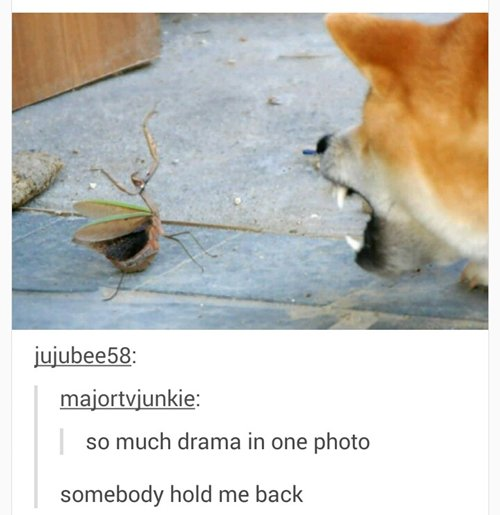 funny-animal-pictures-shibu-mantis