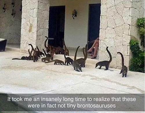 funny-animal-pictures-tiny-brontosaurus