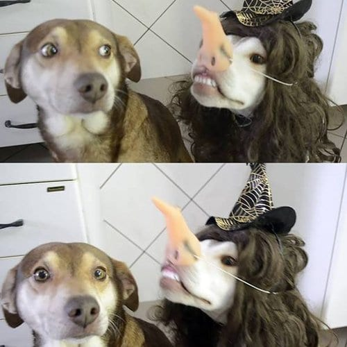 funny-animal-pictures-witch-doggo