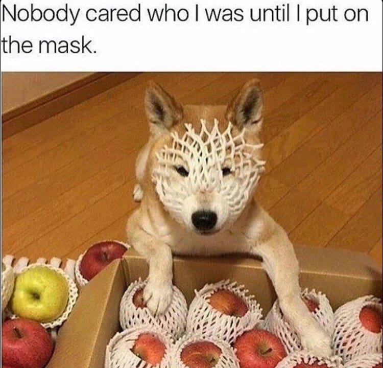 funny-images-cute-dog-mask