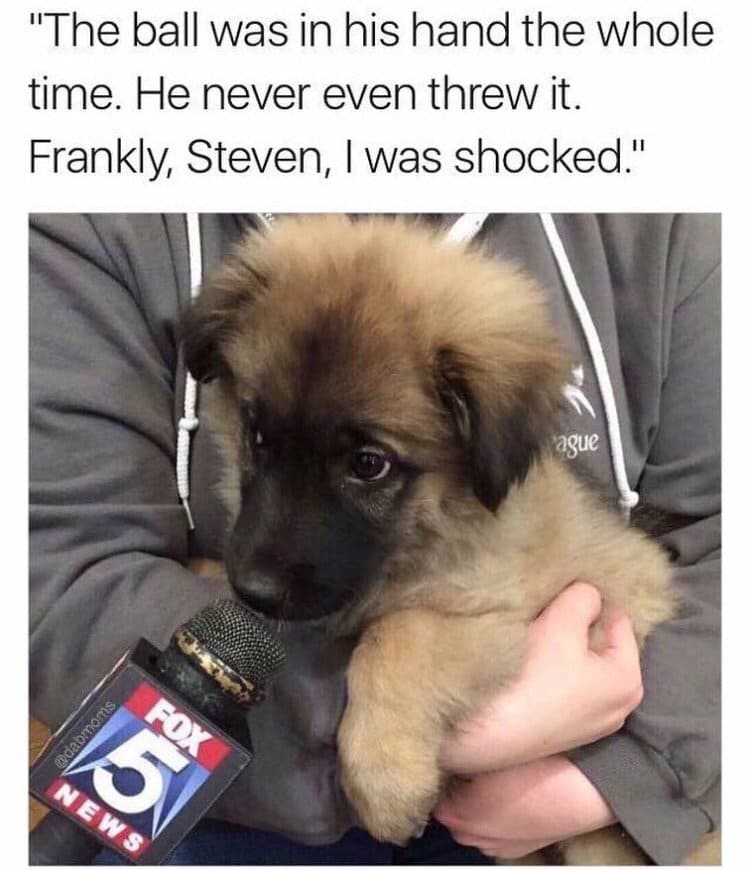 funny-images-puppy-interview
