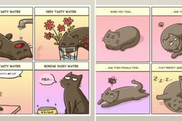 life-with-cats