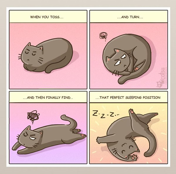 life-with-cats-perfect-sleeping-position