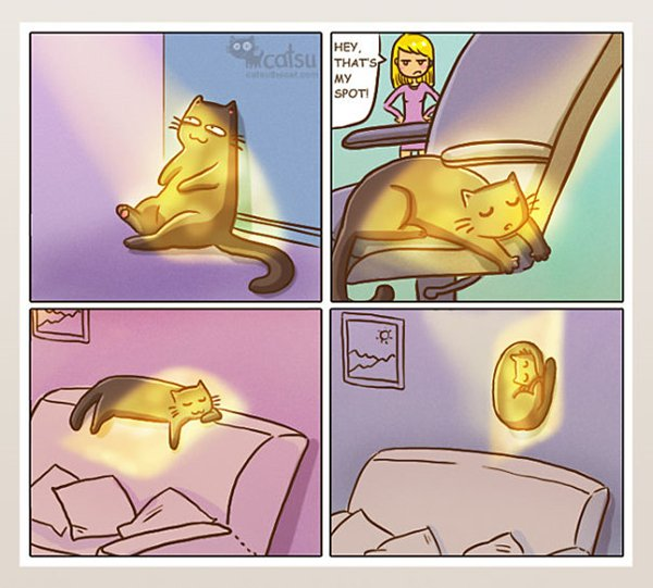 life-with-cats-sun-spot