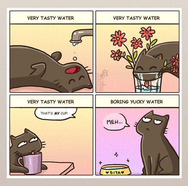 life-with-cats-tasty-water-not-in-bowl
