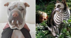 pet-halloween