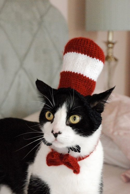 pet-halloween-costumes-cat-in-the-hat