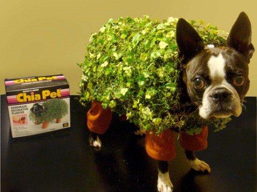 pet-halloween-costumes-chia-pet-doge