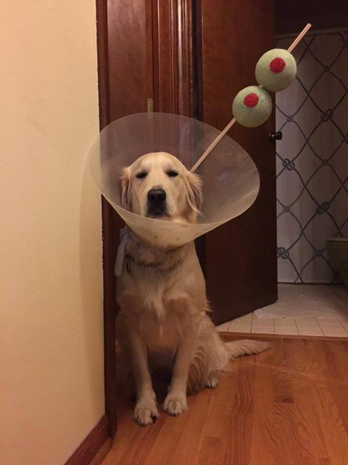 pet-halloween-costumes-cone-of-shame-martini