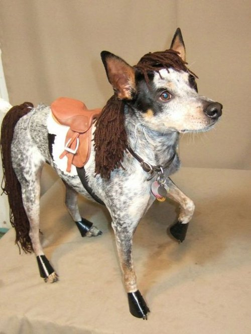 pet-halloween-costumes-horse-dog