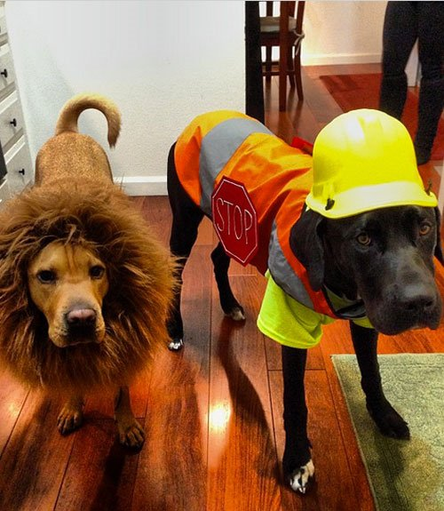 Halloween Costume Construction Worker