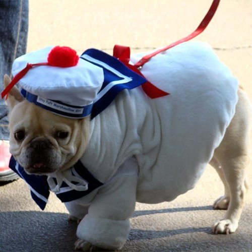 pet-halloween-costumes-stay-puft-marshmallow