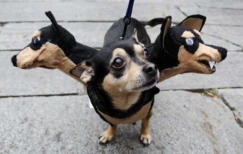 pet-halloween-costumes-three-headed-dog