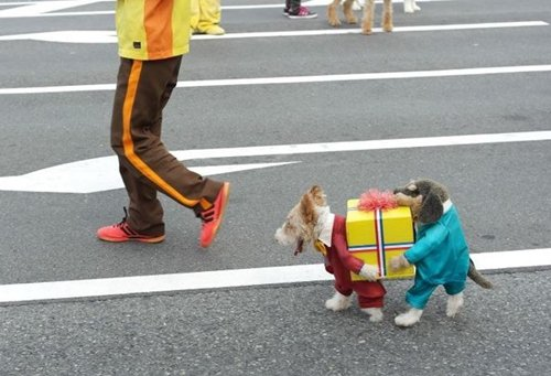 pet-halloween-costumes-two-dogs