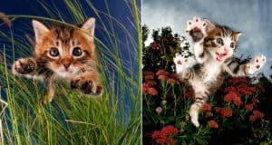 rescue-kittens