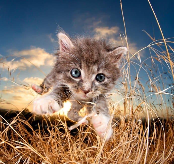 rescue-kittens-pouncing-bam-bam