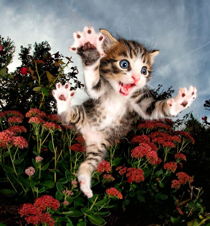 rescue-kittens-pouncing-chicken-flowers