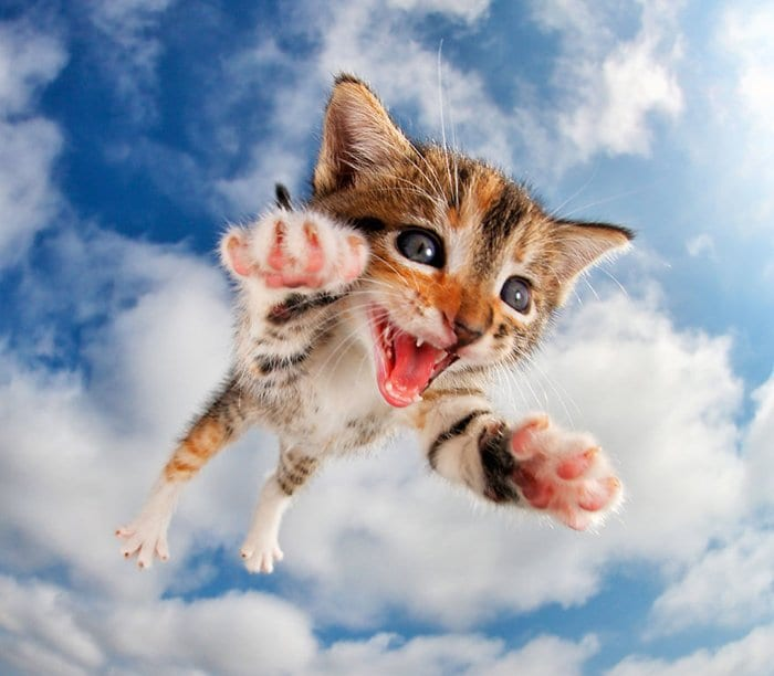rescue-kittens-pouncing-flying-fuzzbucket