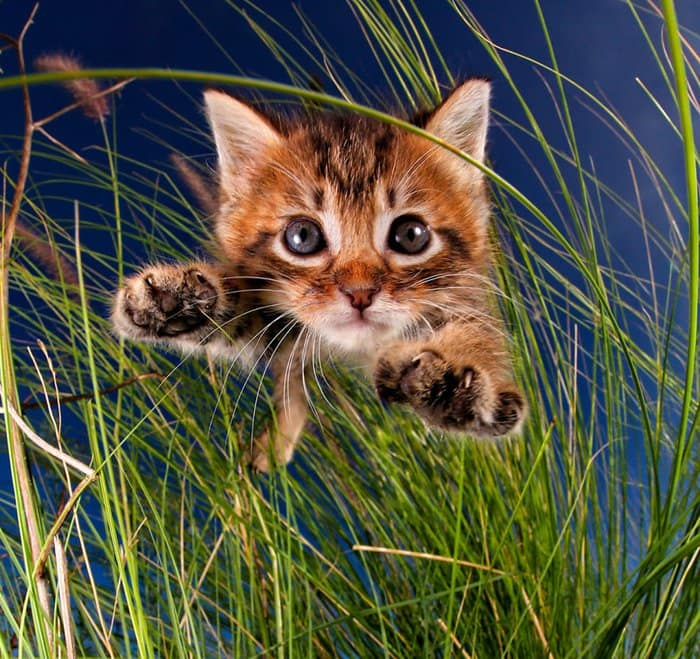 rescue-kittens-pouncing-grass-bug-a-boo