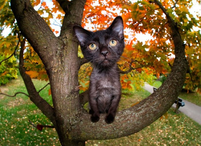 rescue-kittens-pouncing-petunia-in-tree