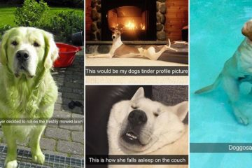 hilarious-snapchats-involving-dogs