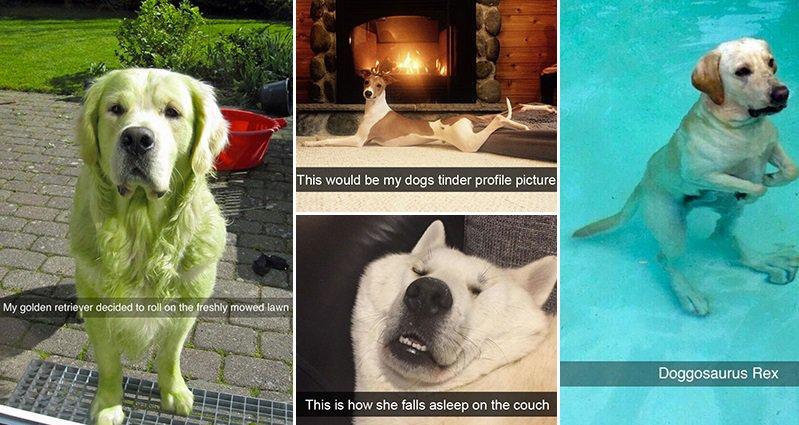 hilarious-snapchats-involving-dogs
